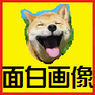 【面白画像】笑える犬の画像を集めてみました【閲覧注意】(随時追加)